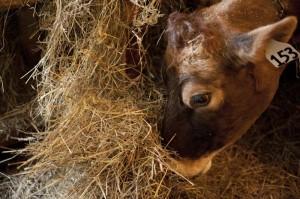 Woven Meadows Dairy 2
