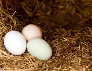 eggs-in-straw
