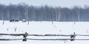 Woven-Meadows-Winter-2014