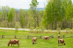 2014 cows-101