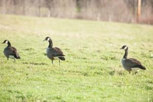 Woven Meadows Spring-106