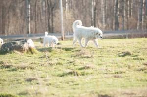 Woven Meadows Spring-121